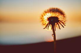 wendbaarheid van de ziel