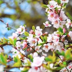 lente-blij-zijn
