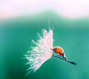 leven begint waar angst verdwijnt