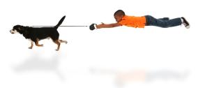 houd de hond